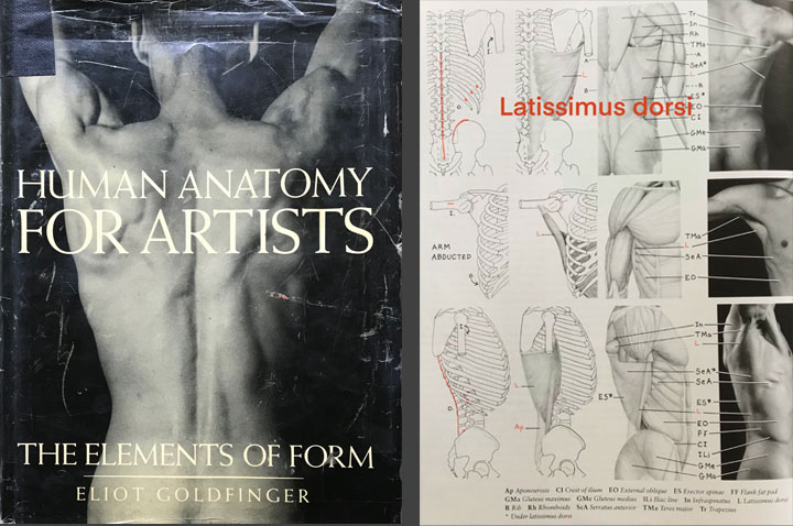 Human Anatomy for Artist